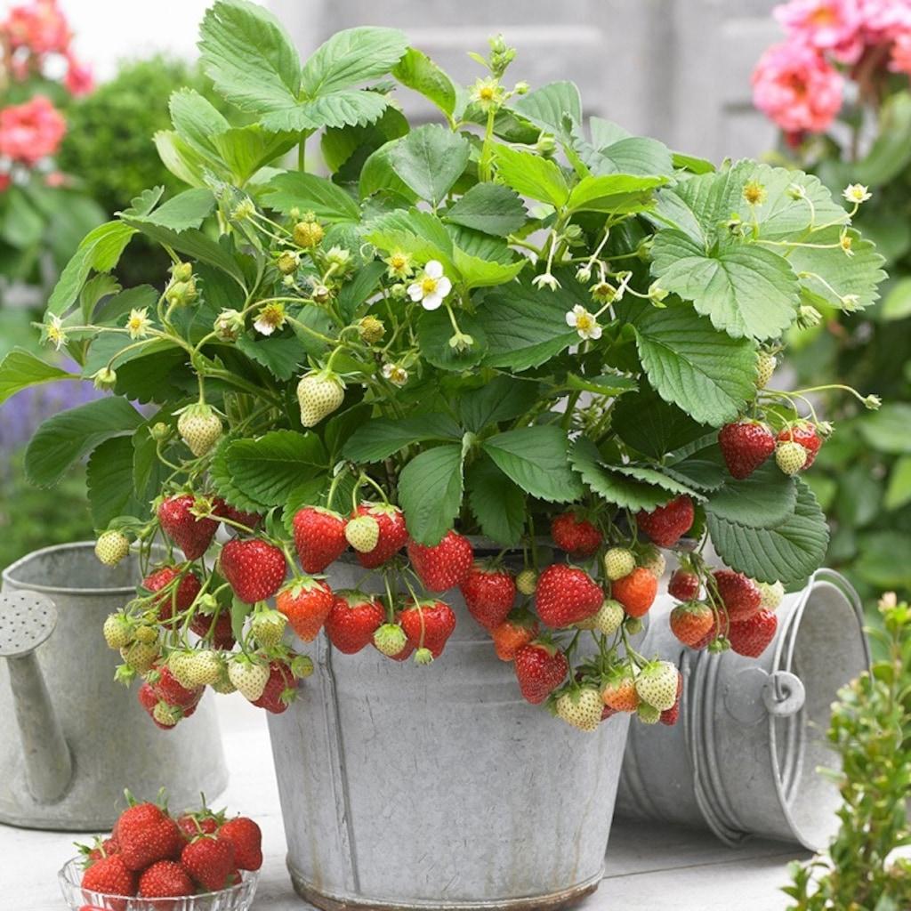 Bahçeniz için Çiçek Çeşitleri