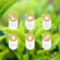 Hamman Tea  400 GR  - - Ceylon Tea %100 İthal Çay