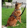 Petviya Köpek Eğitim Gezdirme Tasması - Göğüs Bel Tasması Kayışı