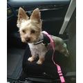 Petviya Köpek Kedi Araç Emniyet Kemeri Oto Seyahat Gezdirme Tasma
