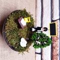 Öğretmenler Günü Temalı Minyatür Bahçe M-1