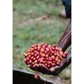 Mineiro Coffee Guatemala Antigua P.  Öğütülmüş Filtre Kahve 250g