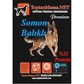 *T-Mama HIGH Somonlu Kuzu Etli 15 kg Balıklı Köpek Maması 15kg
