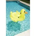 Supersized Duck Rider - Mega Ördek Binici Deniz Yatağı