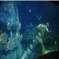 SEA LIFE İstanbul Akvaryum için İndirimli Giriş Biletleri