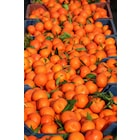 mandalina 10kg meyve suyu meyve ve sebzeler  mandalina tatlı