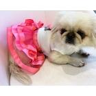 dogi&dog fil tütü köpek elbisesi-kedi elbisesi-köpek kiyafeti-