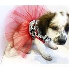 dogi&dog mini tütü köpek elbisesi-köpek kiyafeti-kedi elbisesi
