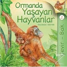 Orman Hayvan çocuk çocuk Gençlik Kitapları N11com