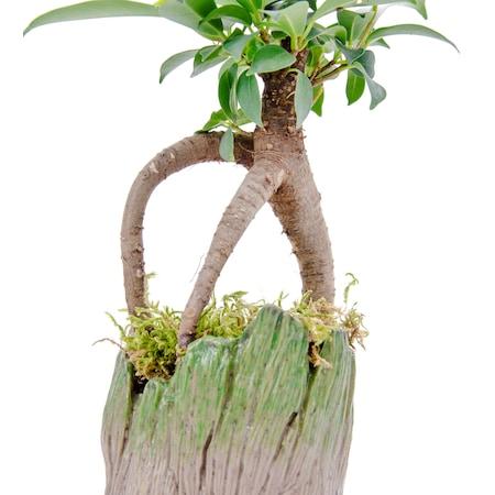 Baby Groot Mini Bonsai