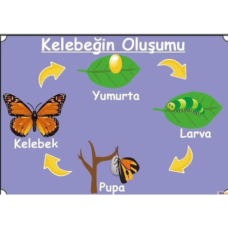 Kelebek Kağıt ürünleri N11com