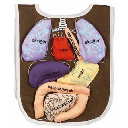 Organ önlüğü N11com