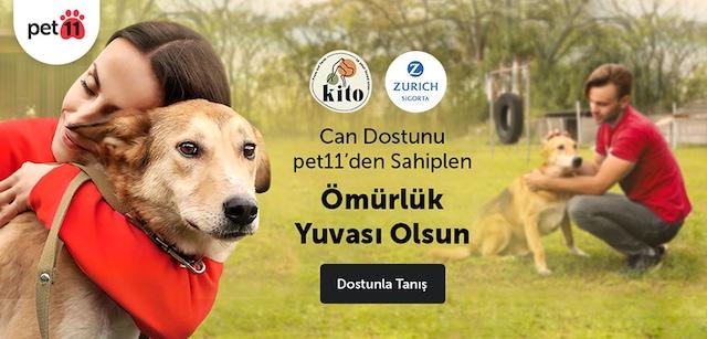 Barınaktan Köpek Sahiplenme - Evcil Hayvan Sahiplendirme