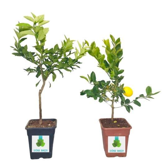 Farklı Modellerde Bahçe ve Çiçek Aksesuarları