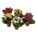 Süs Çiçekleri Farklı Boyutlardaki Tasarımları ile Mekanlara Hava Katıyor