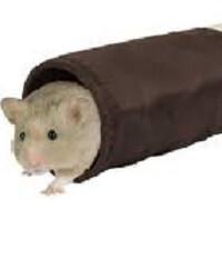 Hamsterlar Nasıl Beslenmeli?