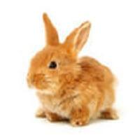 Tavşanlar Nasıl Beslenmeli?