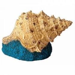 Akvaryum Deniz Kabuğu ve Akvaryum Dekoru