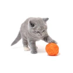 Kedi Oyuncakları Marka & Fiyatları