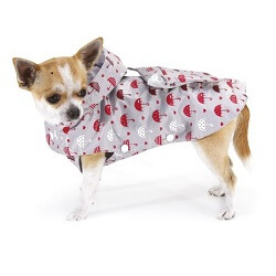Köpek Yağmurluğu Nedir?