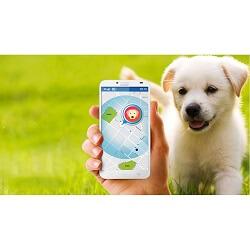 Akıllı Takip Cihazları Evcil Hayvanlar İçin Nasıl Kullanılır?