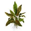 Bitki Vitaminleri Ne İşe Yarar?