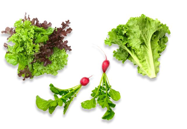 Akdeniz Salataları