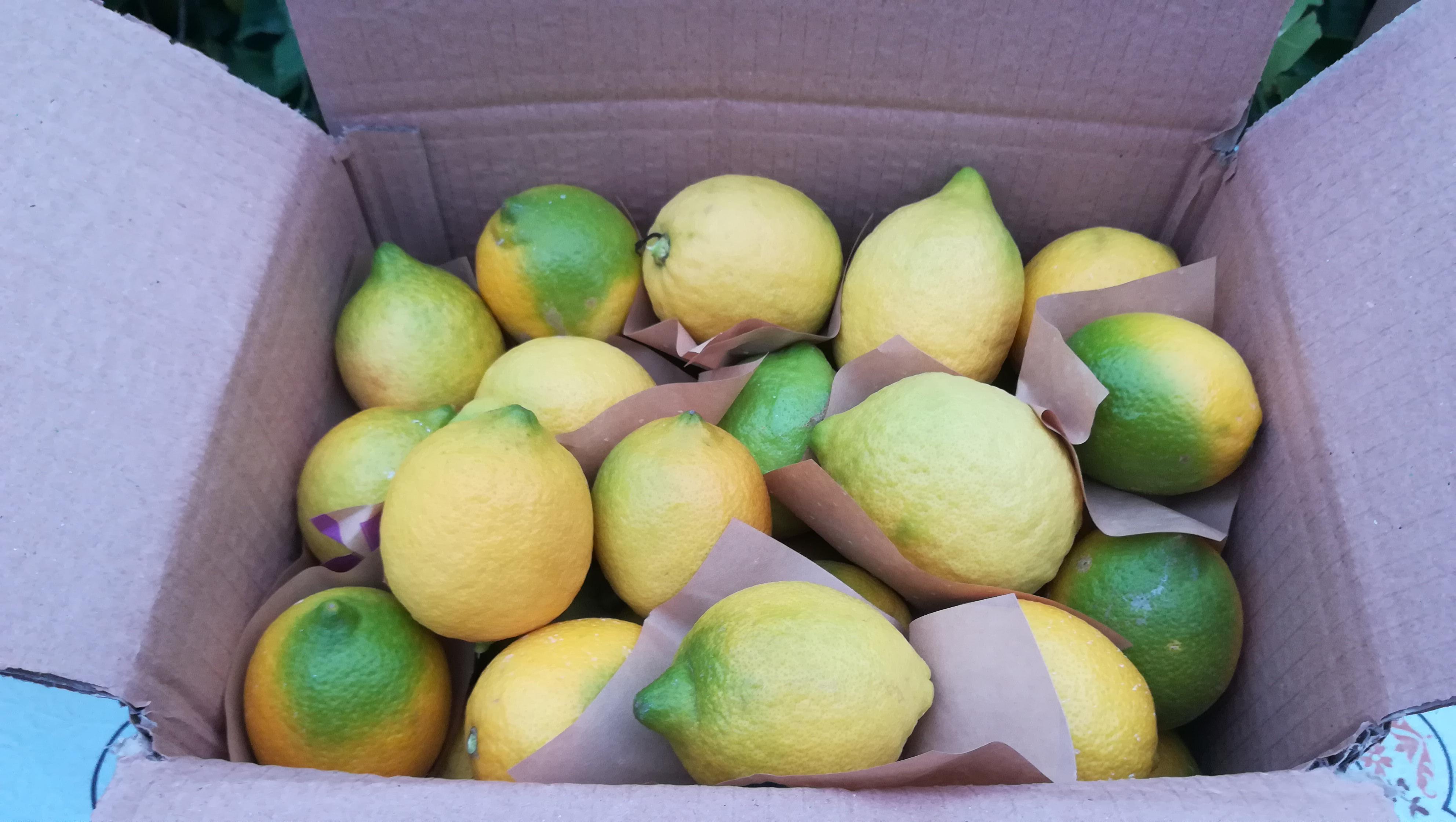 dalından Limon